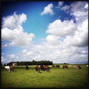 160714 allemaal paarden