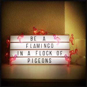 160725 flamingo's