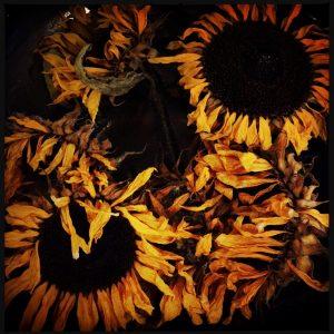 161013 zonnebloemen